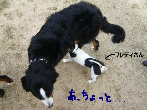 011_convert_20121013214333.jpg