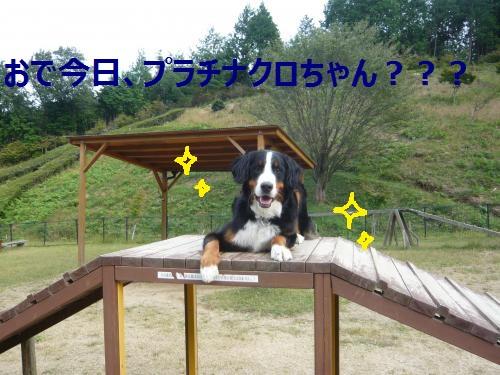 012_convert_20121013214728.jpg