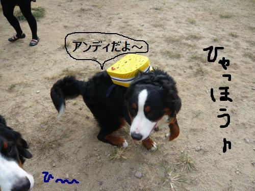 014_convert_20121013215101.jpg