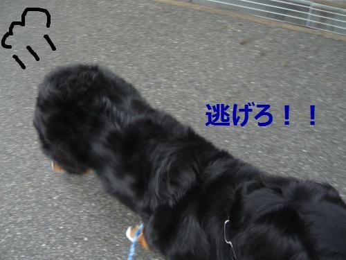 019_convert_20121106141137.jpg