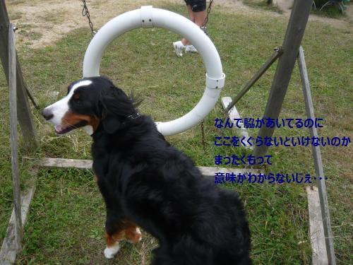 021_convert_20121013215833.jpg