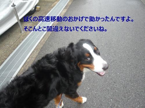 023_convert_20121106141550.jpg