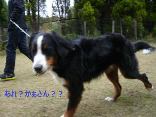 025_convert_20121204234201.jpg