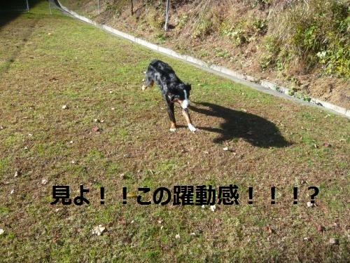 040_convert_20121206210803.jpg