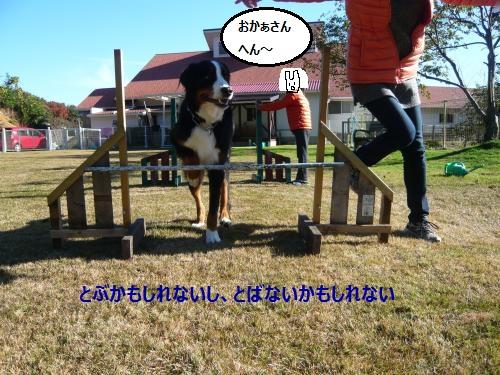 044_convert_20121206221039.jpg