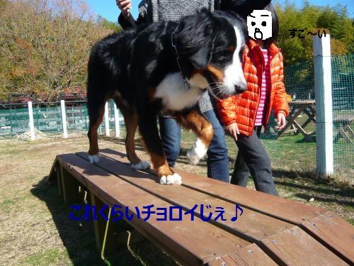 052_convert_20121206224944.jpg