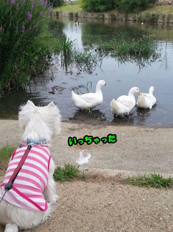 20120724_181614.jpg