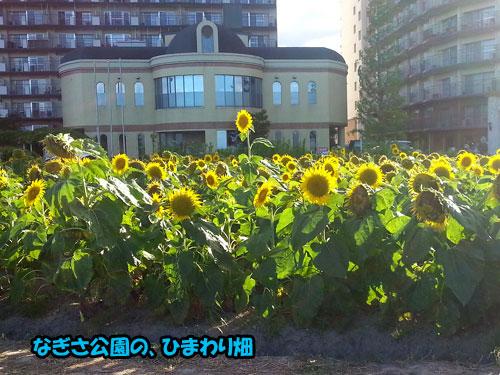 20120804_170333.jpg