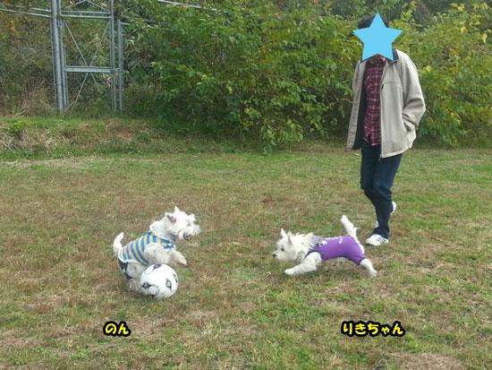 20121103_142656.jpg