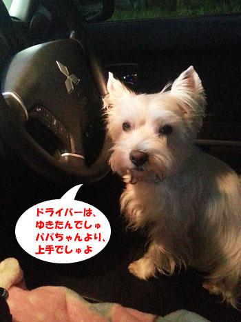 20121110_051524.jpg