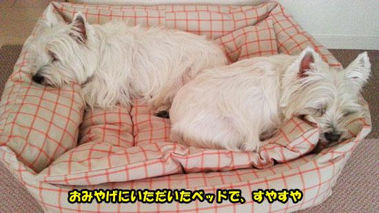 20121216_153100.jpg