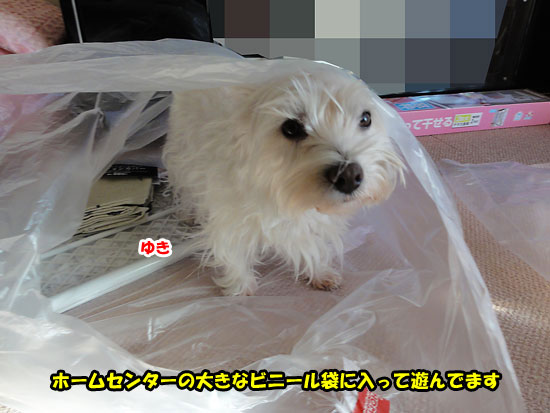 DSC00688_20121221180731.jpg