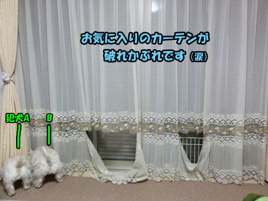 DSC00765_20121221180033.jpg
