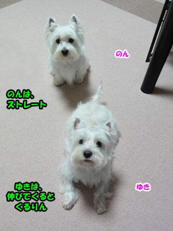 DSC00812_20121216192121.jpg