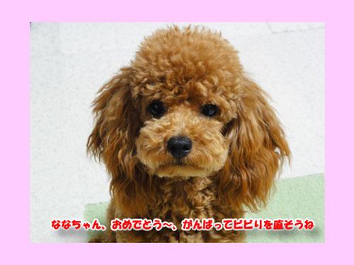 DSC08054_20120805174929.jpg