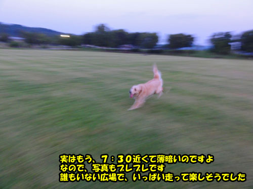 DSC08722.jpg