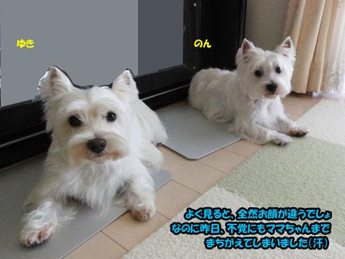 DSC08877.jpg