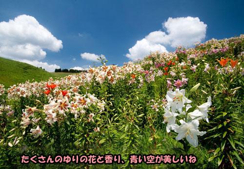 DSC_8622s.jpg