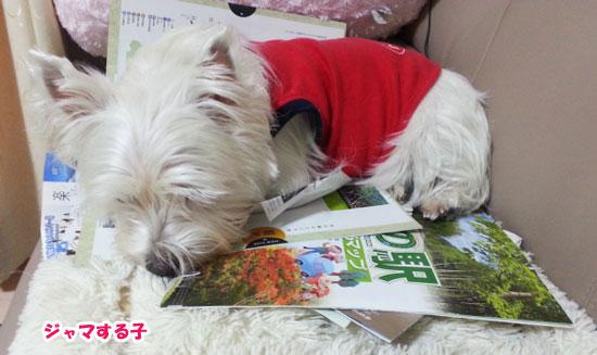 yuki_20130104215823.jpg