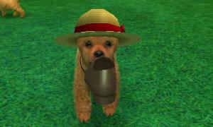 dogs0862.jpg