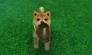 dogs0866.jpg