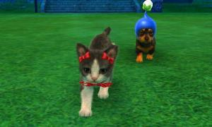 dogs0867.jpg