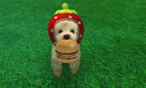 dogs0871.jpg