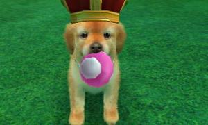 dogs0900.jpg