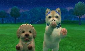 dogs0905.jpg