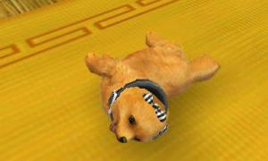 dogs0912.jpg