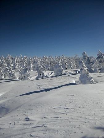 八幡平山頂付近02(2013.1.23)キヨ君撮影