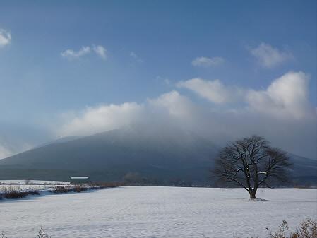上坊牧野の一本桜01(2012.12.12)
