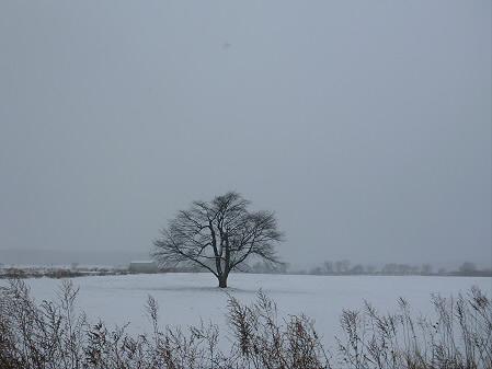 上坊牧野の一本桜01(2012.12.19)