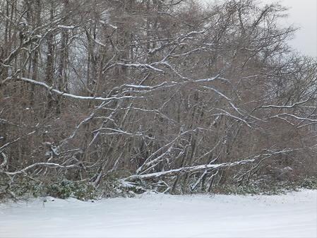 上坊牧野の道路02(2012.12.21)