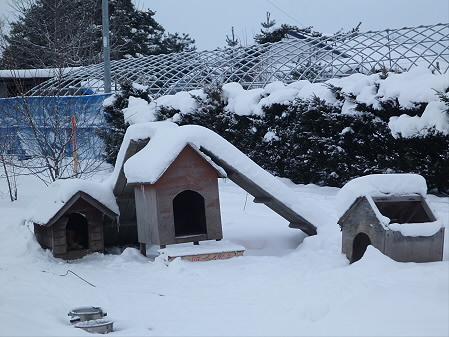 犬小屋スリー01(2013.1.4)