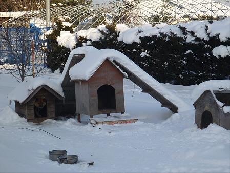 平笠の犬小屋スリー01(2013.1.5)