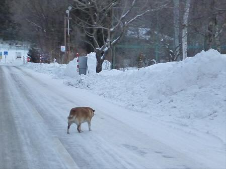 野良犬01(2013.1.19)