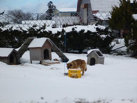 平笠の犬小屋スリー01(2013.1.19)