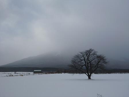 上坊牧野の一本桜01(2013.1.19)