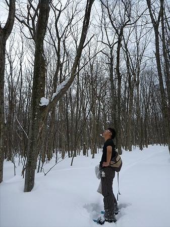県民の森七滝12(2013.1.30)