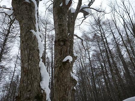 県民の森七滝15(2013.1.30)