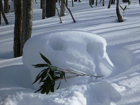 県民の森七滝25(2013.1.30)