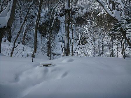県民の森七滝38(2013.1.30)