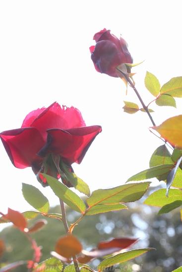 cantik2_20130129221501.jpg