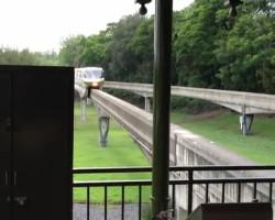 Squirrel halts Train