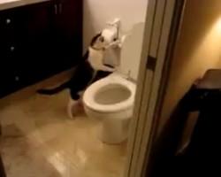 家の水道代がとても高い!と思ったら犯人はペットの猫だった♪