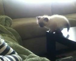 Kitten fall