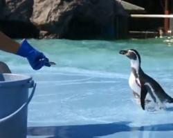 滑った事に驚いて大慌てで逃げるペンギン