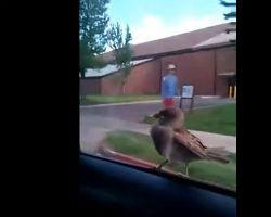 Crazy bird taking a ride
