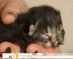 Two-faced kitten born in RIlitter